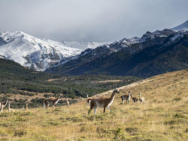 our project torres del paine explora conservation reserve