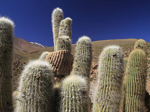 Atacama Desert Conservation Reserve